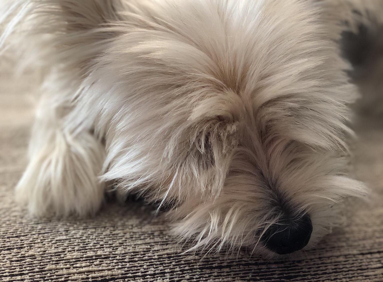 IPhone X Perro Twitter